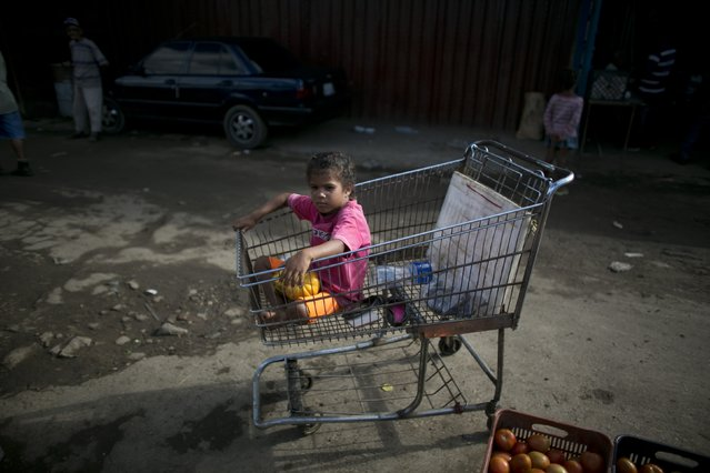In this September 12, 2016 photo, a girl sits in a supermarket cart as she waits for her dad at the market he works at in Porlamar, Venezuela. The child's father Alexander Velasquez spent the afternoon asking for food donations from vendors at Conejero market where he works as a porter. (Photo by Ariana Cubillos/AP Photo)