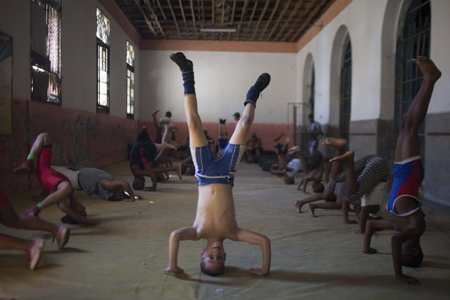 Oscar Torres, 9, (C) leads an exercise during a wrestling lesson in downtown Havana, October 30, 2014. (Photo by Alexandre Meneghini/Reuters)