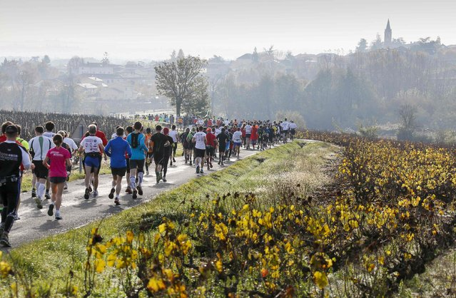 Competitors run past vineyards at the start of the Marathon International du Beaujolais race in Fleurie, November 22, 2014. (Photo by Robert Pratta/Reuters)