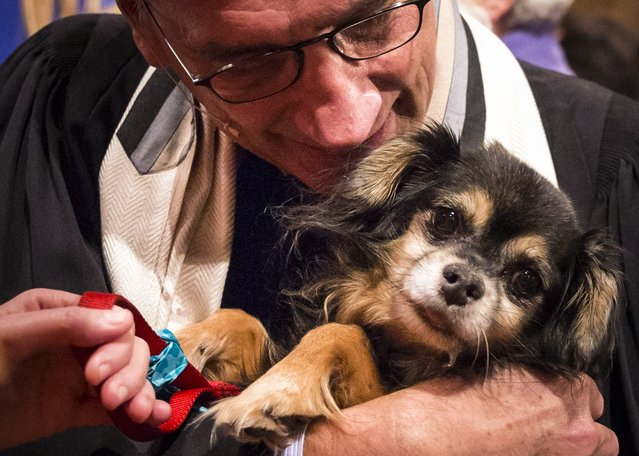 """A dog is blessed by an church officials during the """"Blessing of the Animals"""" at the Christ Church United Methodist in Manhattan, New York December 7, 2014. (Photo by Elizabeth Shafiroff/Reuters)"""