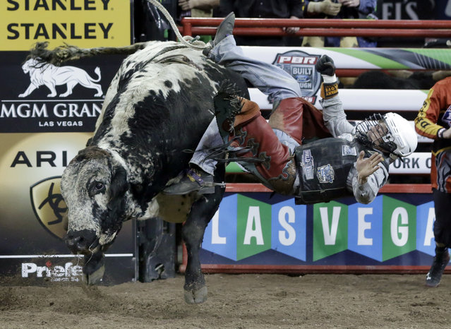 Lachlan Richardson, from Australia, rides Donardo during the Professional Bull Riders Buck Off, in New York's Madison Square Garden, Friday, January 16, 2015. The top 35 bull riders compete during the PBR event, returning to New York for the ninth consecutive year. (Photo by Richard Drew/AP Photo)