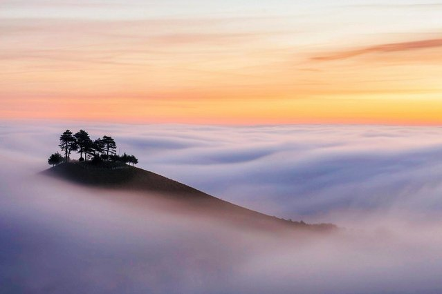 Misty morning: the pines on Colmer's Hill, near Bridport, Dorset, made the best of early light on January 16, 2021 as other regions faced danger from heavy rain and melting snow. (Photo by Mark Andreas Jones/Solent News)