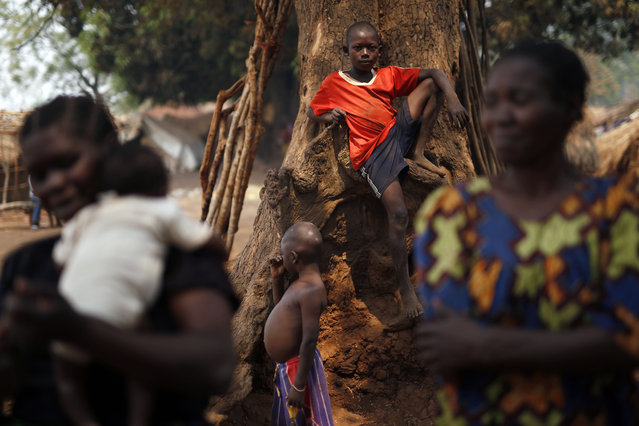 Christian families living in a refugee camp stand under a tree in Kaga-Bandoro, Central African Republic, Tuesday February 16,  2016. (Photo by Jerome Delay/AP Photo)