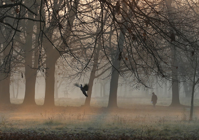 A man walks through the morning mist in a park in Rozzano, near Milan, northern Italy, Thursday, December 17, 2015. (Photo by Antonio Calanni/AP Photo)