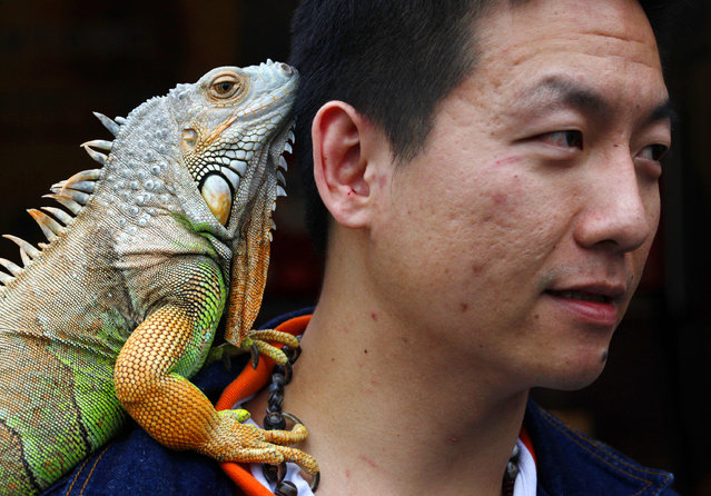 A man carries his pet iguana on his shoulder in Taipei, Taiwan April 24, 2010. (Photo by Nicky Loh/Reuters)