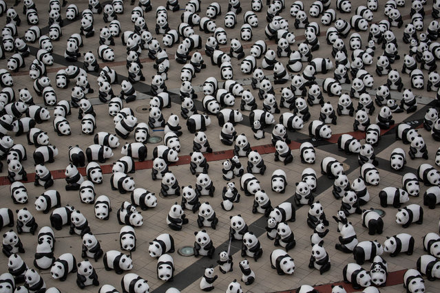 The total of 1,600 paper mache pandas designed by French artist Paulo Grangeon are seen during a flash mob front of Bangkok Art & Culture Center in Bangkok, Thailand, March 10, 2016. The exhibit is part of the World Wide Fund's project where the 1600 paper pandas symbolize the last pandas still present in the wild. (Photo by Guillaume Payen via ZUMA Wire)