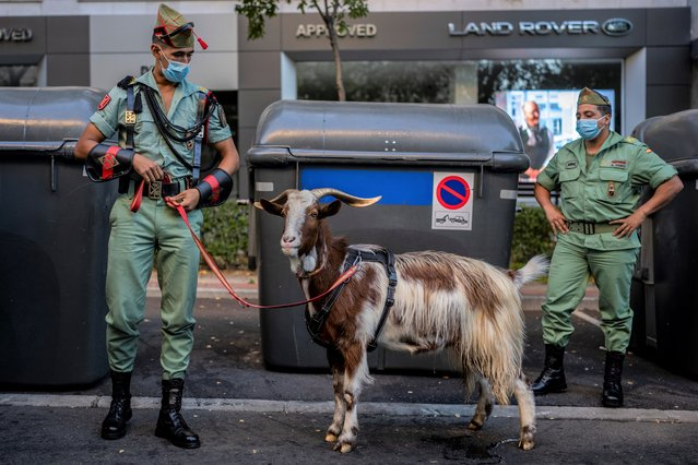 """Members of La Legion, an elite unit of the Spanish Army, including a goat they use as a pet wait for the start of a military parade celebrating a holiday known as """"Dia de la Hispanidad"""" or Hispanic Day in Madrid, Spain, Tuesday, October 12, 2021. Spain commemorates Christopher Columbus' arrival in the New World and also Spain's armed forces day. (Photo by Manu Fernandez/AP Photo)"""