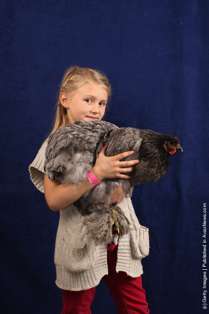 Alicia Smith, aged 7 from Stafford, holds her 6 month old Blue Cochin