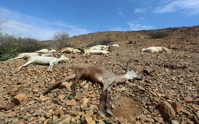 Carcasses of goats are seen near Jidhi town of Awdal region, Somaliland April 10, 2016. (Photo by Feisal Omar/Reuters)
