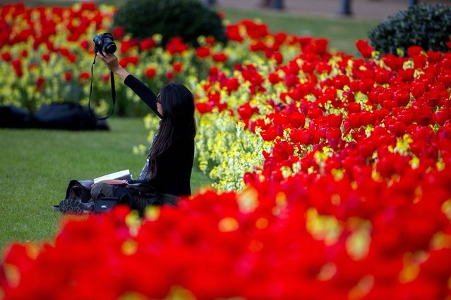 A woman takes a selfie in front of flowers in St James' Park, London, during fine weather, on April 21, 2014. (Photo by Steve Parsons/PA Wire)