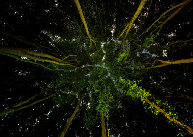 Lungs of the Earth by Ian Wade, Somerset, UK. Photographing trees at night with a long shutter speed and four LED spotlights isn't easy: the tiniest amount of wind will blur the canopy. It took Ian Wade five long nights to capture this image. The final image shows the trees in all their splendour. (Photo by Ian Wade/CIWEM Environmental Photographer of the Year 2019)