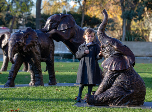 Schoolchildren unveil 21 bronze life-sized elephants at Marble Arch in London, England on December 4, 2019. The sculptures, by artists Gillie and Marc, have been created to highlight the plight of the species which could face extinction by 2040. (Photo by Mark Thomas/Rex Features/Shutterstock)