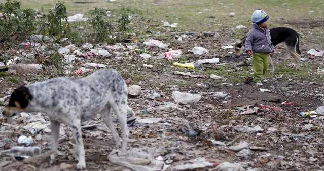 A boy walks among dogs in a dump in the Villa Palito slum in La Matanza, in the greater Buenos Aires area, July 29, 2015. Argentine Persident Cristina Fernandez de Kirchner's heavy government spending has fueled inflation of about 30 percent a year and her trade and currency controls stalled growth, infuriating many middle-class Argentines and business groups. But it has won her support among the poor. (Photo by Marcos Brindicci/Reuters)