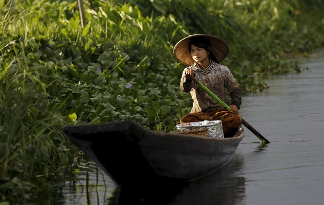 A woman rows her boat as she harvests tomatoes on Inle lake, in Myanmar's Shan State September 4, 2015. (Photo by Soe Zeya Tun/Reuters)