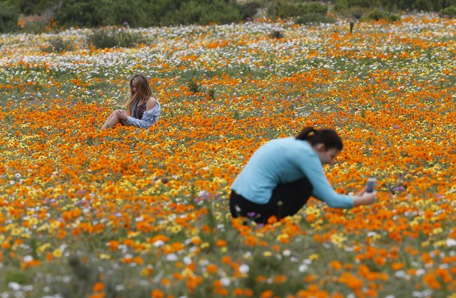 Visitors sit amongst wild flowers in the Postberg section of South Africa's West Coast National Park, September 6, 2015. (Photo by Mike Hutchings/Reuters)