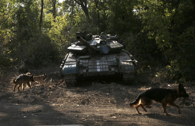 Dogs are pictured near a Ukrainian tank at a position near Donetsk, September 16, 2014. (Photo by David Mdzinarishvili/Reuters)