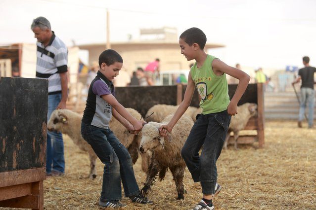 Boys pull a sheep before buying it at a livestock market, ahead of Eid al-Adha  in Benghazi, Libya, September 22, 2015. (Photo by Esam Omran Al-Fetori/Reuters)