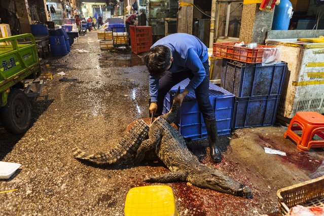 A man chops and cleans a purchased crocodile on Huangsha Seafood Market in Guangzhou, Guandong Province, China, 18 January 2018. (Photo by Aleksandar Plavevski/EPA/EFE)
