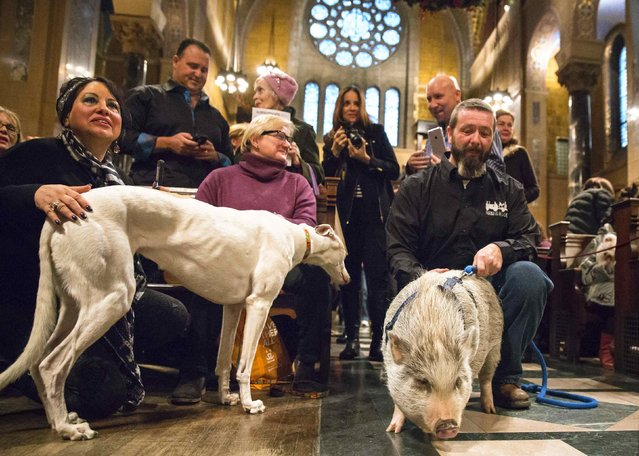 """Owners kneel next to their pets during the """"Blessing of the Animals"""" at the Christ Church United Methodist in Manhattan, New York December 7, 2014. (Photo by Elizabeth Shafiroff/Reuters)"""