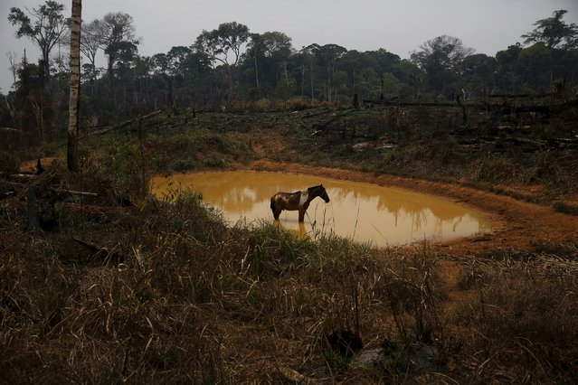 A horse stands by a lake in Rio Pardo next to Bom Futuro National Forest, in the district of Porto Velho, Rondonia State, Brazil, September 1, 2015. (Photo by Nacho Doce/Reuters)