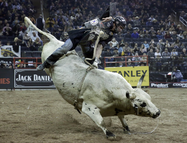 Billy Robinson, from Galax, Va., rides Gentleman Jim during the Professional Bull Riders Buck Off, in New York's Madison Square Garden, Saturday, January 17, 2015. (Photo by Richard Drew/AP Photo)