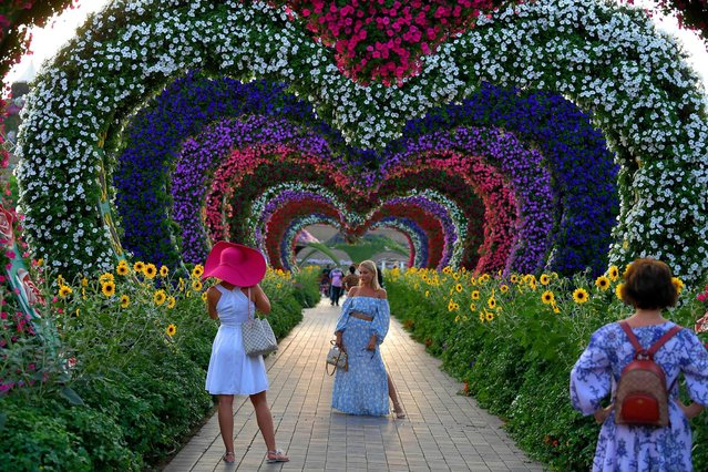 A woman poses for a picture in a flower tunnel at the Dubai Miracle Garden, the world's largest flower garden, in the United Arab Emirates, on November 11, 2020. The Miracle Garden, home to giant floral structures and millions of flower and plant varieties, is open for visitors from November 1. (Photo by Karim Sahib/AFP Photo)