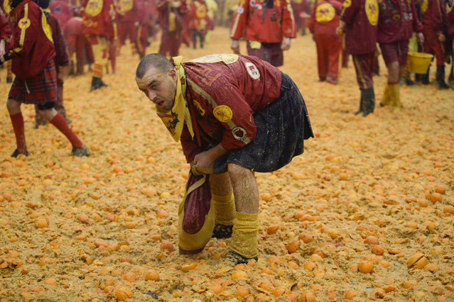 A man collects oranges during the traditional orange-throwing battle in the northern Italian Piedmont town of Ivrea, Italy, Tuesday, February 9, 2016. (Photo by Luca Bruno/AP Photo)