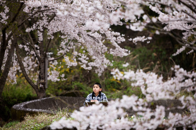 Aone elementary school students sketches Cherry tree out side of school during art class on April 9, 2015. (Photo by Ko Sasaki/The Washington Post)