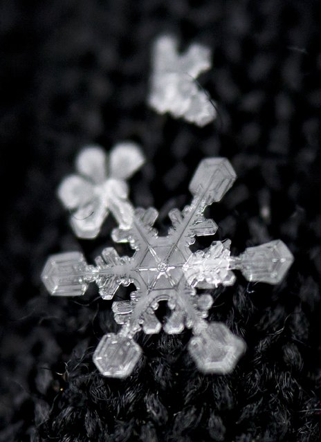 A snowflake rests in the fibers of a black glove after a fresh snowfall in Knoxville on Tuesday, January 28, 2014. (Photo by Adam Lau/News Sentinel)