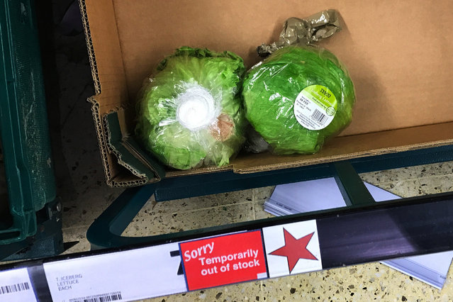 """Remaining iceberg lettuces are seen next to a sign reading """"Temporarily out of stock"""" in a supermarket, in London, Britain February 3, 2017. British supermarkets have taken to rationing shoppers to three iceberg lettuces per visit after bad weather hit growing conditions in Spain, leading to a shortage in supplies that is set to continue through to March. (Photo by Dylan Martinez/Reuters)"""