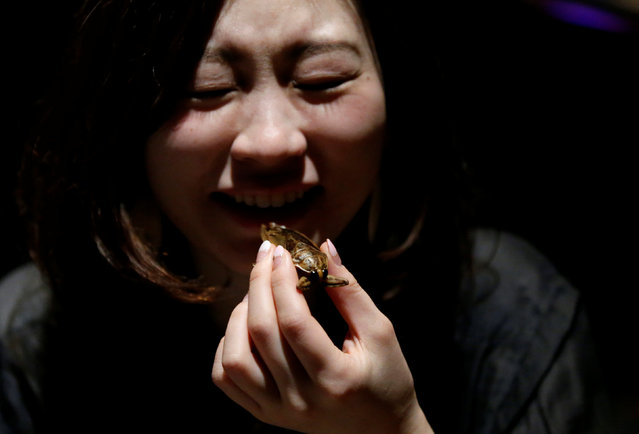 A woman tries to eat a water bug at a bar in downtown Tokyo, Japan, February 12, 2017. (Photo by Toru Hanai/Reuters)