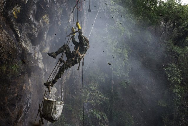 Chinese ethnic Lisu honey hunter Mi Qiaoyun is surrounded by bees as he climbs on a makeshift ladder while gathering wild cliff honey from hives in a gorge on May 11, 2019 near Mangshi, in Dehong prefecture, Yunnan province China. (Photo by Kevin Frayer/Getty Images)