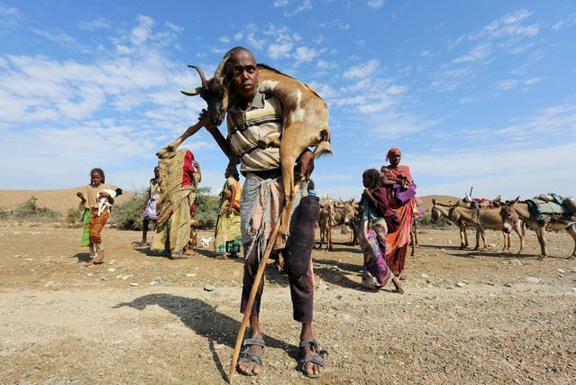 A boy carries a goat near Jidhi town of Awdal region, Somaliland April 10, 2016. (Photo by Feisal Omar/Reuters)