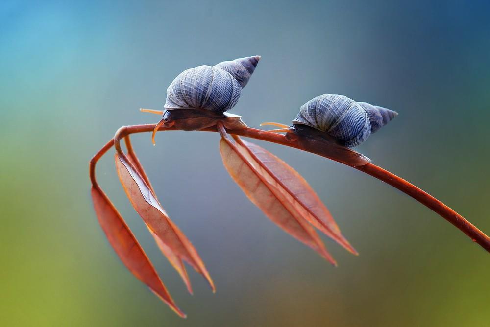 Nordin Seruyan's Beautiful Garden Insect Photography