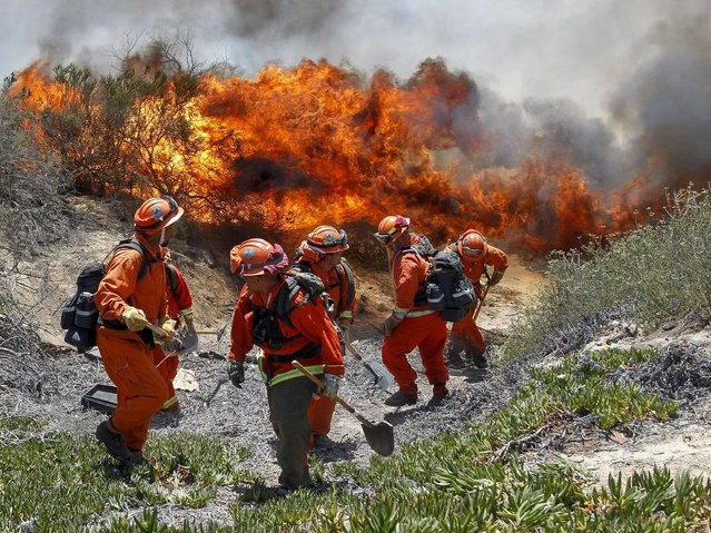Inmates from Oak Glen Fire Camp in Riverside retreat to higher ground as the flames start to move close while they work to control the fire near Oriole Court in Carlsbad. (Photo by Hayne Palmour IV/AP Photo/U-T San Diego)