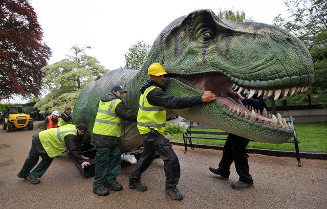 A life size animatronic Tyrannosaurus Rex dinosaur arrives at Bristol Zoo Gardens
