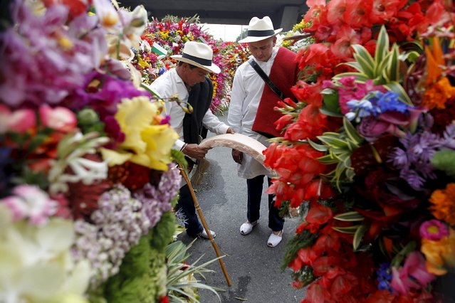 Flower growers, known as silleteros, look at flower arrangements during the annual flower parade in Medellin, Colombia, August 9, 2015. (Photo by Fredy Builes/Reuters)
