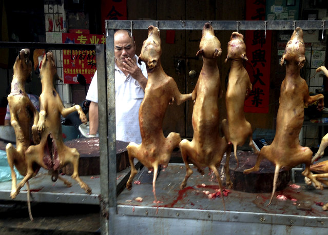 A vendor smokes behind a display of dog meat at a dog meat market on the day of a local dog meat festival in Yulin, Guangxi Autonomous Region, June 22, 2015. (Photo by Kim Kyung-Hoon/Reuters)
