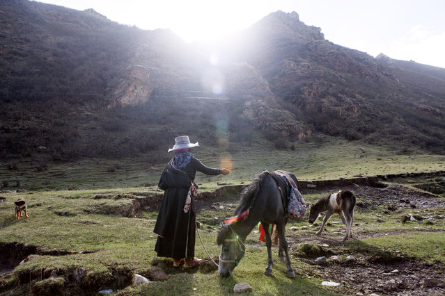 A Tibetan woman with horses in a remote area of the Yushu Autonomous Prefecture of the Tibetan Plateau on May 31, 2016. (Photo by Giulia Marchi/The Washington Post)