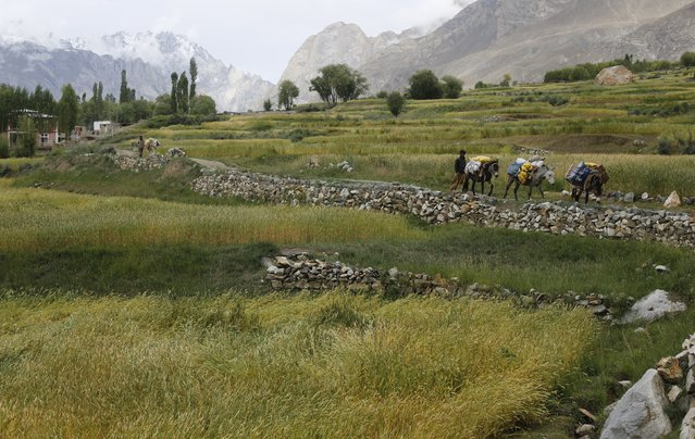 Porters guide their mules outside the village of Askole in Pakistan August 28, 2014. Geographically, Pakistan is a climbers paradise. It rivals Nepal for the number of peaks over 23,000 feet and is home to the world's second tallest mountain, K2. (Photo by Wolfgang Rattay/Reuters)