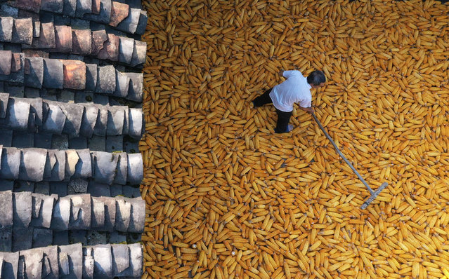 A villager dried corn. Chongqing, China, 29 August 2020. (Photo by Costfoto/Barcroft Media via Getty Images)