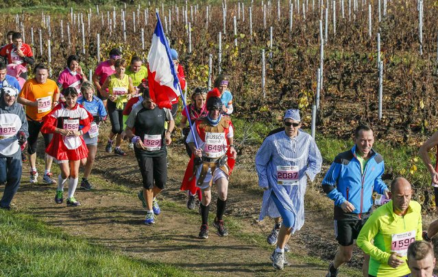 Costumed competitors, one with a French flag, run past vineyards during the Marathon International du Beaujolais race in Corcelles, November 22, 2014. (Photo by Robert Pratta/Reuters)