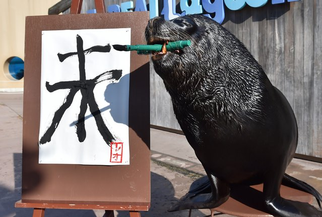 """A sea lion paints a Chinese character for """"sheep"""" in calligraphy as part of a New Year's Day attraction at the Hakkeijima Sea Paradise aquarium in Yokohama, suburban Tokyo on December 31, 2014. The event, marking the forthcoming Chinese lunar calendar """"Year of the Sheep"""", is part of the aquarium's New Year's attractions until February 1. The actually 2015 lunar new year will begin on February 19. (Photo by Kazuhiro Nogi/AFP Photo)"""