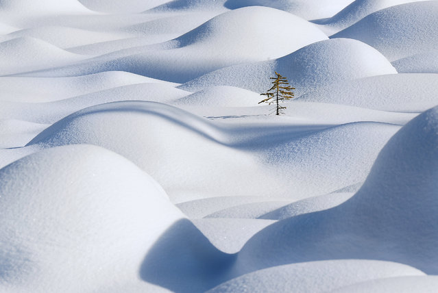 """Standing in the waves"". Imagine yourself is this lone tree, standing in the snow waves. You might not be able to realize that you just became the main subject of an image, but you do realize something beautiful is happening. Location: Jasper national park, AB, Canada. (Photo and caption by Victor Liu/National Geographic Traveler Photo Contest)"
