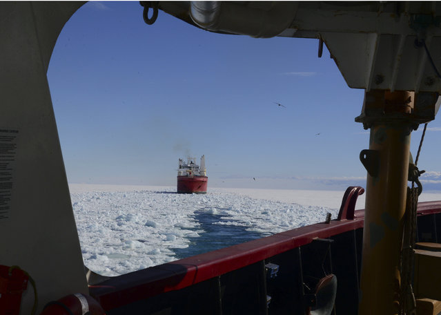 In this January 26, 2015 photo, made available by the U.S. Coast Guard, the crew of the Coast Guard Cutter Polar Star opens a channel through the ice to the National Science Foundation's McMurdo Station, Antarctica, for the supply ship Ocean Giant. Solar Star's crew is aiding in the rescue of the Australian boat Antarctic Chieftain that suffered damage to three of its four propellers after getting stuck Wednesday February 11, 2015, and can no longer maneuver. (Photo by Petty Officer 1st Class George Degener/AP Photo/U.S. Coast Guard)