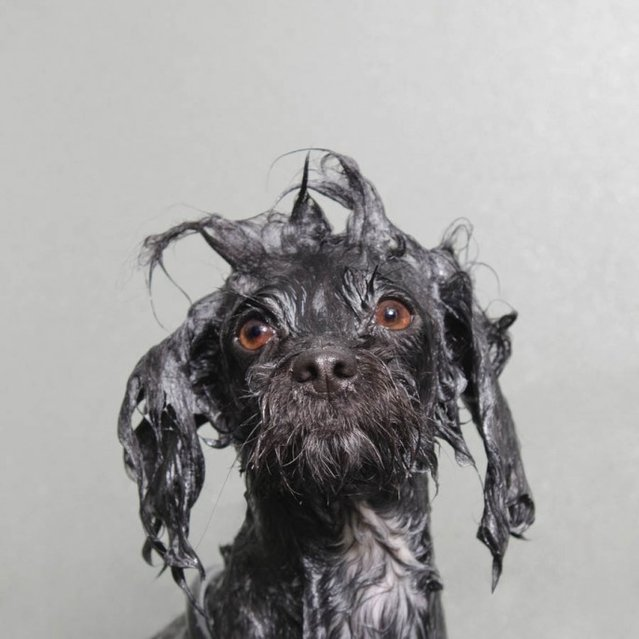 Wet Dogs By Sophie Gamand