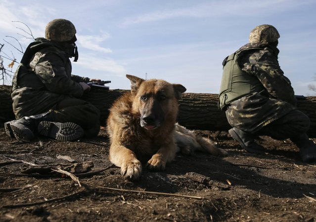 A dog lies on the ground as members of the Ukrainian armed forces take their positions near Kurakhovo, not far from Donetsk March 11, 2015. (Photo by Gleb Garanich/Reuters)