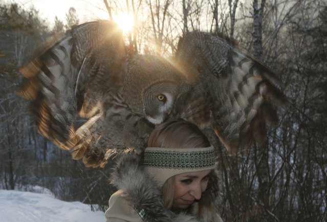 Zoo employee Daria Cherepanova walks with Mykh, an 8-month-old great gray owl, during a training session which is a part of Royev Ruchey zoo's programme of taming wild animals for research, and for enlightenment and interaction with visitors, in the Siberian taiga forest in the suburb of Krasnoyarsk, Russia January 10, 2017. (Photo by Ilya Naymushin/Reuters)