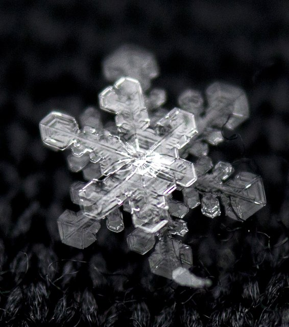 An intricate snowflake rests on a black glove following a fresh snowfall in Knoxville on Tuesday, January 28, 2014. (Photo by Adam Lau/News Sentinel)