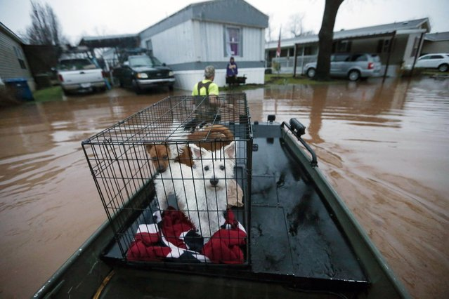 Sam Breen tows his skiff as he helps his friend Roger Dove, not pictured, retrieve his dogs Edison, foreground, and Allie, from his home, as floodwater rises at the Pecan Valley Estates trailer park in Bossier City, La., Wednesday, March 9, 2016. (Photo by Gerald Herbert/AP Photo)